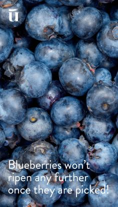 Blueberries won't ripen any further once they are picked #LuvoTips