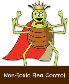 Non-toxic flea control for dogs, as some commercial flea products contain highly questionable chemicals, which are also transferred to humans.