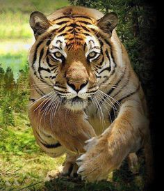 Palm oil kills: How cruel can mankind be to let a creature like this nearly go extinct.