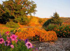 Boise Idaho Botanical Gardens updated photo