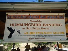https://www.facebook.com/tim.hurst.5#!/SABObird Experience the rare treat of hummingbird banding with www.sabo.org and www.arizonasunshinetours.com