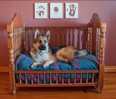Cats Toys Ideas - Turn a baby crib into dog bed Pet Accessories, Dog Toys, Cat Toys, Pet Tricks - Ideal toys for small cats Old Cribs, Dog Furniture, Upcycled Furniture, Furniture Ideas, Street Furniture, Distressed Furniture, French Furniture, Retro Furniture, Refurbished Furniture