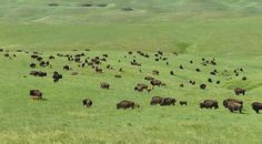 """Formerly known as the Triple U, Land Report 100er Ted Turner purchased Standing Butte Ranch, a 46,000-acre swath of Great Plains native prairie grassland that has never been scarred by disc or blade. Used to film """"Dances with Wolves,"""" Turner's acquisition of this #ranch will ensure that it is not subdivided, and that its pristine, native landscape is preserved. 