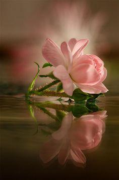 Bonitas Imagenes De Flores Con Frases Para Felicitar A Las Mamas En