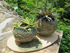 macetas para cactus, crasas y suculentas