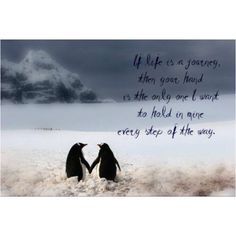 Penguin Love Quotes Captivating Pinɟŋaŋcɩ'ى💎 On Pinguino Love  Pinterest