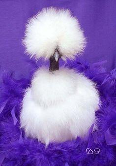 YEEEEEEES! showgirl chickens - Google Search