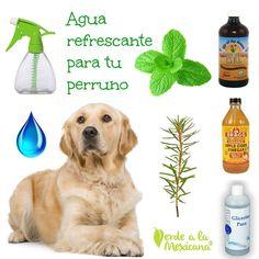 Baby Dogs, Pet Dogs, Doggies, Cortes Poodle, Cute Cartoon Images, Organic Apple Cider Vinegar, Cute Dog Pictures, Fox Terrier, Neko Cat
