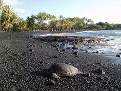 Most Unique: Punalu'u Beach, Hawaii Island