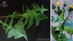 planta-Comestíveis