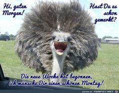 ein Bild für's Herz 'Montag.jpg'- Eine von 137 Dateien in der Kategorie 'Montag' auf FUNPOT. Kommentar: Guten Morgen