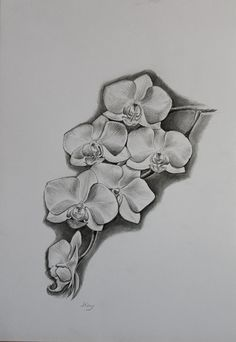 White Orchid Original Pencil Drawing by Jane Kay by Kaysarts