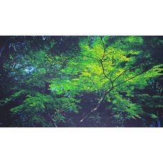 【kazuhiro480812】さんのInstagramをピンしています。 《太古の森🎄昨日の別ver😌 #森#木が好き#緑好き #過去pic #写真好き #写真で伝えたい私の世界 #写真好きな人と繋がりたい #写真撮ってる人と繋がりたい #ポンコツ写真部 #スマホ写真#スマホ写真撮ってる人と繋がりたい #すまほ写真ら部 #スマホ写真部 #igs_photos #igcaptures #ig_japan #ig_photo #insta_shot #forest #photo#photography #naturelovers #naturepic #green #tree#japan#tokyo#自然が好き》