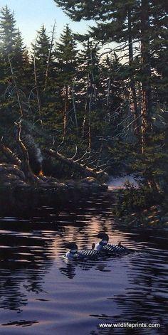 Artist Derk Hansen Unframed Loon Family Art Print Morning Reflections   WildlifePrints.com