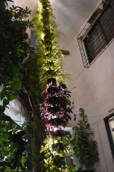 Trellis | Vertical Garden | Green Wall | Green Matrix | Vertical Garden  Kochi | Vertical