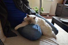 My lovely cat - 2