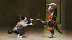 #kungfu #cat #fight