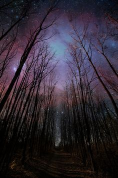 Night forest sky