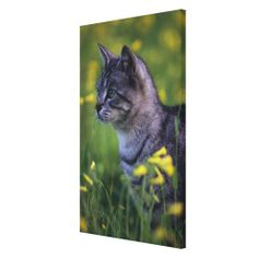 =>quality product          House Cat Stalking in Grass Gallery Wrapped Canvas           House Cat Stalking in Grass Gallery Wrapped Canvas We have the best promotion for you and if you are interested in the related item or need more information reviews from the x customer who are own of them b...Cleck Hot Deals >>> http://www.zazzle.com/house_cat_stalking_in_grass_gallery_wrapped_canvas-192981432862748058?rf=238627982471231924&zbar=1&tc=terrest