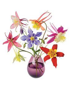 Flat Flowers raamsticker Akelei | Accessoires | Bakker Hillegom