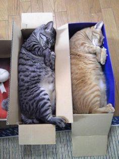 Love These Adorable Sleeping Kitties ❤☺❤