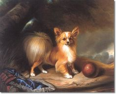 M. Tucker 1893 - Papillon With A Ball Archival Fine Art Print