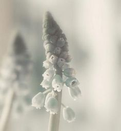 lily of the valley by FutureEdge
