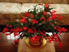 vintage christmas material | White Christmas Cactus For Sale