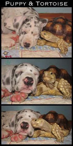 Dog and tortoise | The 30 Most Inspiring Interspecies Friendships Of The Year
