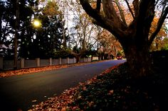 Early morning colours - Wahroonga