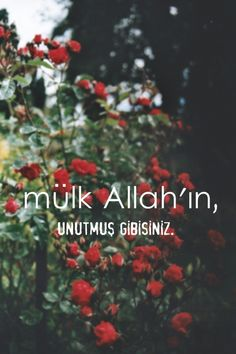 Movie Quotes, Book Quotes, Islamic Quotes Wallpaper, Islam Facts, Allah Islam, New Thought, Catechism, Muslim Quotes, Sufi