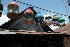 yogyakarta bird market