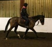 Stunning bay mare for sale | HorseDeals.co.uk