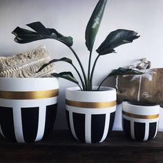 Betonstory :: she continues … - How To ForgeBilderesultat for beton in ballon Painted Plant Pots, Painted Flower Pots, Decorated Flower Pots, Bottle Art, Bottle Crafts, Flower Pot Design, Flower Pot Crafts, Cement Pots, Concrete Crafts