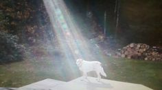 Not Photoshopped: Beam of Light Shines on Fallen Soldier's Miracle Dog. Photo taken by ABC News Kimberly Launier. Read article and watch video.