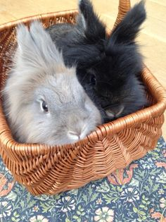Our Bunnies in a basket!