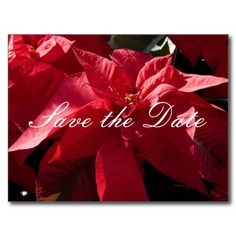 Red Poinsettia Postcards