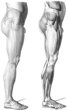Músculos brazos 3