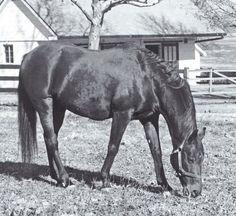 Princequillo, Secretariat's grandsire