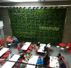 Vertical Garden installed in cafeteria