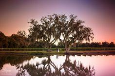 Elegant farm wedding, Florida Barn Wedding, vintage barn, blueberry fields, sunset wedding, Wishing Well Barn