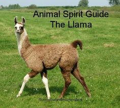 I've been told I look, act, and walk like a llama...