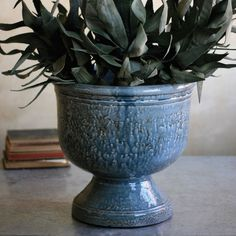 Blue ceramic planter. Perfect for cactus! #plants #decor