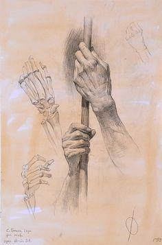 How To Draw Library: Hình vẽ nghiên cứu giải phẫu của sinh viên Nga