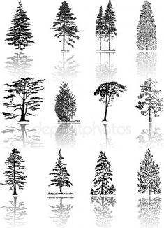 Tree Silhouettes – Stock Illustration # 1947548 - All About Realistic Drawings, Art Drawings, Types Of Pine Trees, Natur Tattoos, Forest Tattoos, Pine Tree Tattoo, Tree Sketches, Wood Burning Art, Landscape Drawings