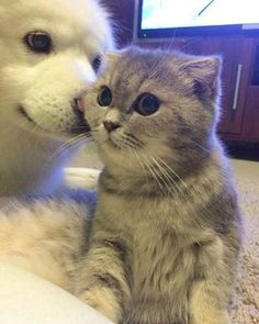 And these two who are just TOO DAMN ADORABLE FOR WORDS. | 19 Super Cute Photos Of Cats And Dogs Being BFFs