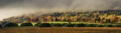 No.311 - Cloud - Number 311 of my 365 photo challenge - A split-toned, stitched, panoramic, landscape image of cloud swirling amongst the Autumn leaves on Moncrieff Hill near Perth, Scotland, lit by the low, afternoon sunshine.