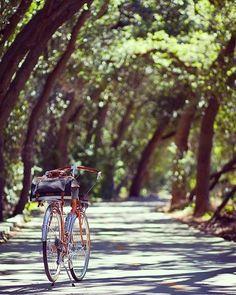 Yeni bir haftadan günaydınlar  #pazartesi #haftabaşı #iş #tatil #manzara #doğa #bisiklet #bisikletliulasim #bisikletliyaşam #bisikletkeyfi #bubisiklet #mersinbisiklet