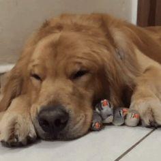 Enough already wake me up #dog #chicks #sleep