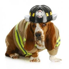 National Pet Fire Safety Day is a day to spread awareness about how to keep your pet safe during a house fire and how to prevent your pet from potentially starting one. Hounds Of Love, Basset Hound Dog, Bassett Hound, Pet Safe, Fire Safety, Losing A Pet, Service Dogs, All Dogs, Dog Pictures